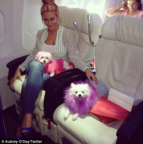"Aubrey O'Day Declared Clinically ""Mental"" so her Dogs Can Fly With Her First Class."