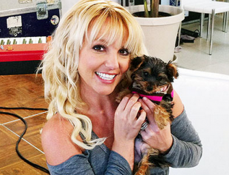 You Will Not Believe How Much Money Britney Spears Spends On Her Dogs!