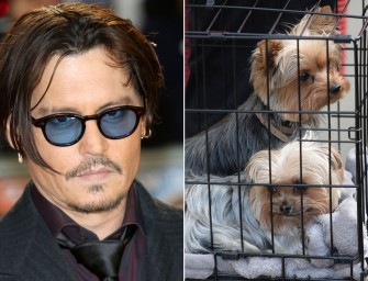Johnny Depp Could Face Up To 10 Years In Prison For Dog Smuggling
