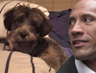 Dwayne 'The Rock' Johnson Is The Greatest, Donates $1,500 To Save Abandoned Puppy's Life!