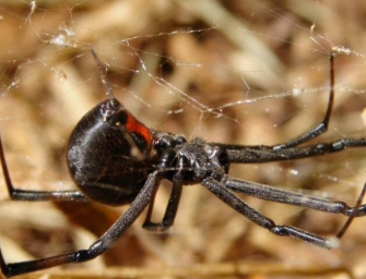 A Man Nearly Burned Down His Parents House While Trying To Kill Spiders With Blowtorch